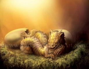Baby Dragon 002