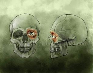 eyeanatomy_side_front_skull_part2
